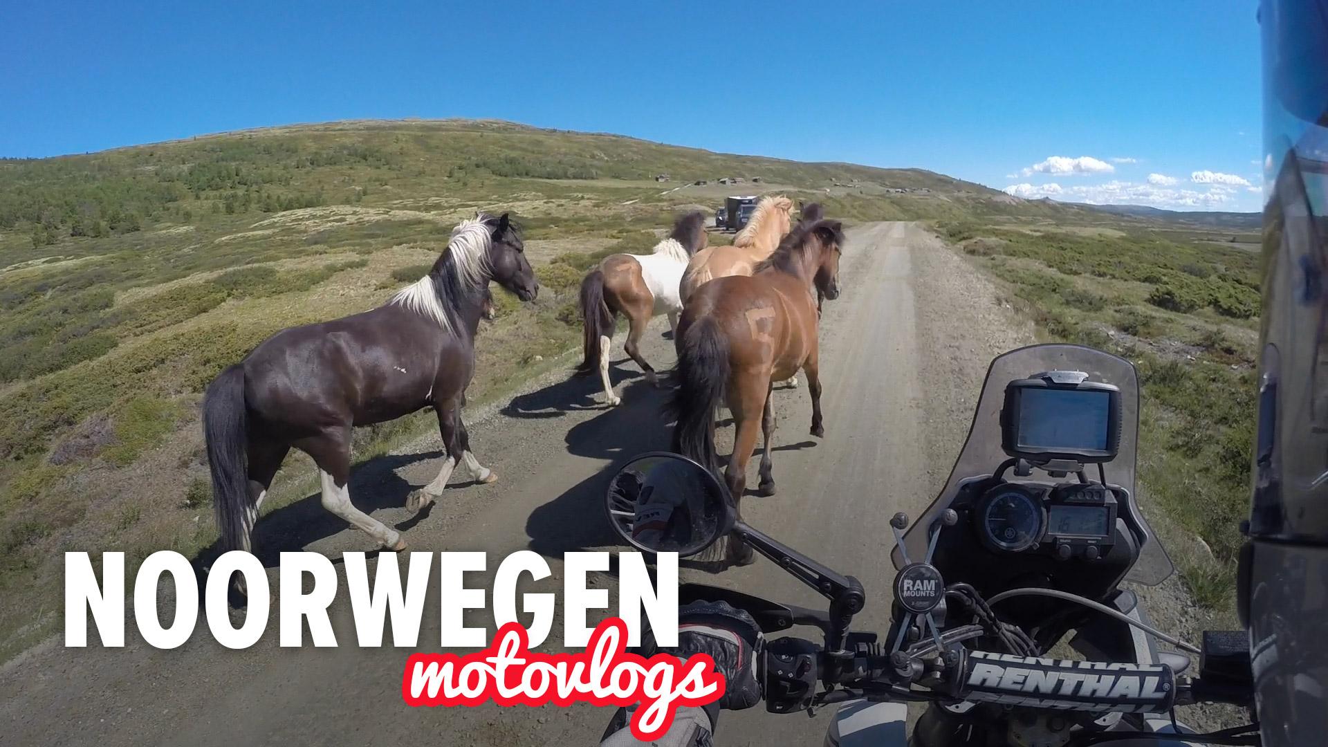 Eigenwijze Paarden en Doodlopende Wegen – Noorwegen Dag 8